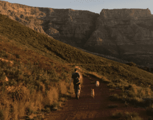 Student walks the dog to Table Mountain