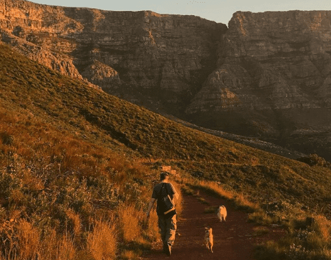 Walking the dogs to Table Mountain