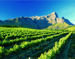 There are many wine farms to visit in Cape Town and the rest of the Western Cape