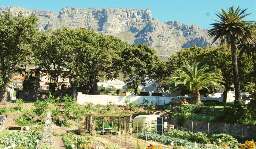 Oranjezicht City Farm
