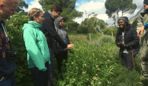 A group of five students standing in an urban permaculture farm