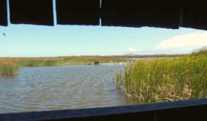 Intaka Island wetlands